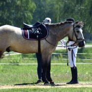 equestrian-1480944_1280